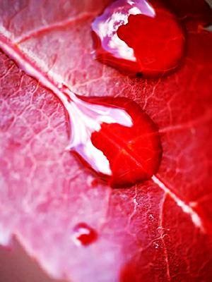 К чему во сне видеть кровь с